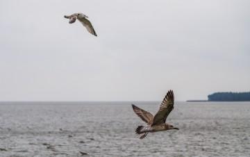 Pamario krašte turistai kviečiami stebėti paukščius.